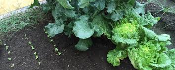 Crop Rotation Chart Vegetable Gardening Plan Your Season In The Garden And Crop Rotation Abc Of Agri