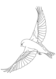 Small Picture Finches flying coloring page Download Free Finches flying