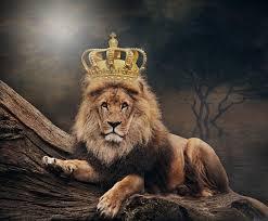Image result for king