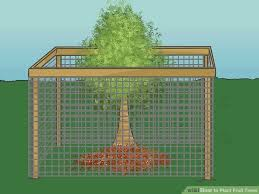 how to plant fruit trees with wikihow best of tree stand roof
