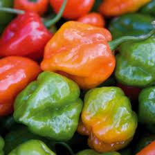 Gardeners Kitchen Scotch Bonnet Chilli Gardeners Kitchen Grow Your Own Scotch