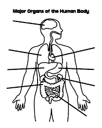 Inspirational Anatomy Of The Human Body Coloring Book Or Anatomy