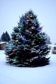 christmas lights outdoor trees warisan lighting. Christmas Lights On Outdoor Trees Photo - 9 Warisan Lighting O