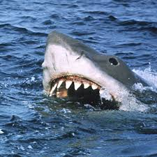 shark.  Shark Inside Shark