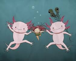 Small Picture 146 best Axolotl ajolote images on Pinterest Amphibians