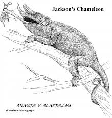 Chameleon Coloring Page Best Of New Animal Picture To Print