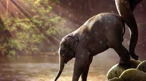 Baby Elephant UHD 4K Wallpaper - Pixelz.cc