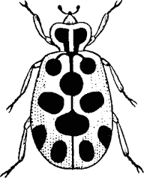 bug clipart black and white. bug clipart black and white r