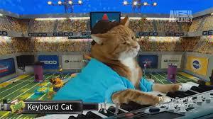 puppy bowl x halftime show.  Puppy Keyboard Cat Puppy Bowl X For Halftime Show Y