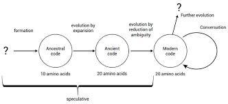 Three Domains Of Life Venn Diagram The Irreducibly Complex Ribosome Creation Com
