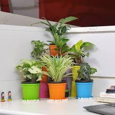 Office cubicle plants Cubicle Decor Table Top Office Desk Plants Nurserylivecom Buy Cubiclefriendly Table Top Office Desk Indoor Plants Online At