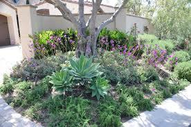 succulents for shade tinaminter com