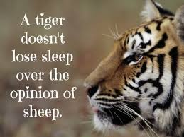 Tiger Quotes 76 Wonderful Tiger Quotes Gallery WallpapersIn24knet