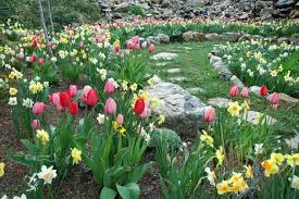 how to plant garden. Traditional Landscape By Laughlin Design Associates, Inc. How To Plant Garden