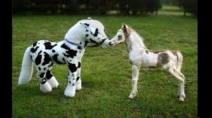 "<b>Cute</b> And Funny Horse Videos Compilation ""<b>Little</b> Pony in <b>Real Life</b> ..."