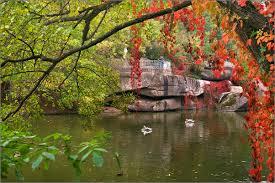 Картинки по запросу фото уманского парка