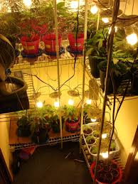little home grow closet growing systems room ideas