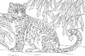 Small Picture Amur Leopard coloring page Free Printable Coloring Pages leopard