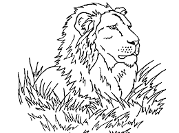 Small Picture Free Printable Lion Coloring Pages For Kids Kleurplaat