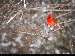 Color Burst   Snow scenes, Free desktop ...