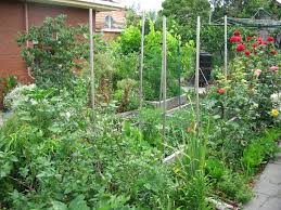 Small Picture My Garden Deep Green Permaculture