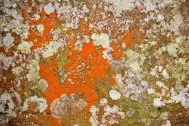 orange mold