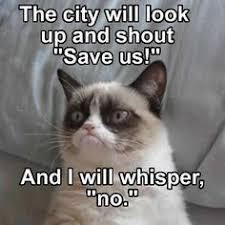 Grumpy Cat on Pinterest | Grumpy Cat Meme, Grumpy Kitty and Angry Cat via Relatably.com