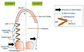 Types Of Breathing Patterns Adncat Different Types Of Respiratory Systems