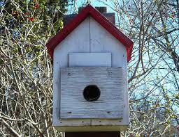 Best Dimensions For Birdhouse Entrance Holes