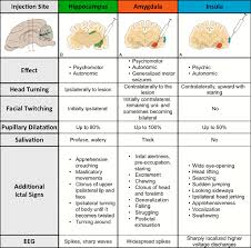 seizure features in experimental