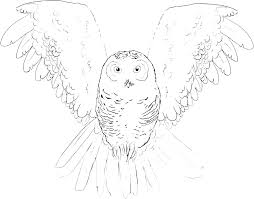 Barn Owl Coloring Page Snowy Pages To Colouring Staranovaljainfo