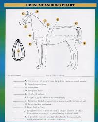 Harness Measuring Chart Frontier Equestrian Draft Horse