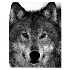 wolf face black and white.  White Black U0026 White Wolf Artwork Plaque Throughout Face And