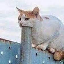 """Résultat de recherche d'images pour """"cat cursed memes"""""""