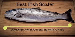 10 Best <b>Fish Scaler</b> [Day & Night When Comparing With A Knife] -