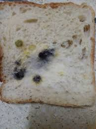 How To Make Mold Grow On Bread 10 Steps With Pictures Wikihow