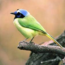 Animals For > All Birds Pictures With Names   Birds pictures with names,  Bird, Bird photo