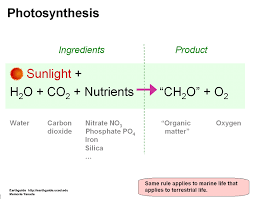 write a word equation for photosynthesis