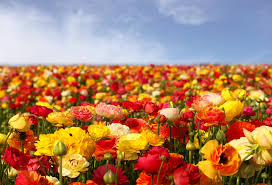 fast growing flowers to put in your