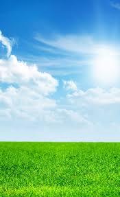 green grass blue sky. Delighful Green Download  Pin Wallpaper Inside Green Grass Blue Sky