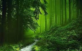 Desktop Wallpaper Forest Green