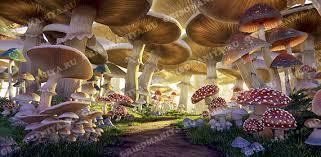 <b>Классификация</b> (систематика) <b>грибов</b> | Грибомания