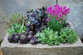 landscaping with succulents and rocks drought tolerant garden designs small containers for succulents