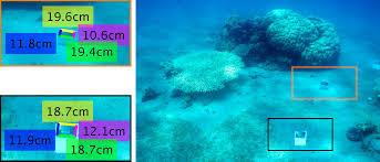 Underwater Single Image Color Restoration Using Haze Lines