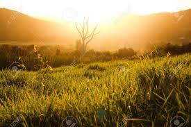 Tall Grass Field Sunset  123RFcom