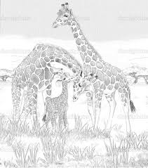 Safari Giraffes Coloring Page For The