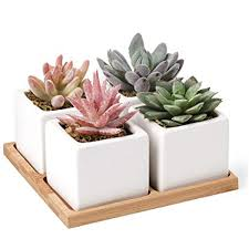 Office decorative Whiteboard Artificial Succulent Plants Potted Fake Succulents Set Of Home Bath Egexpress Amazoncom Artificial Succulent Plants Potted Fake Succulents