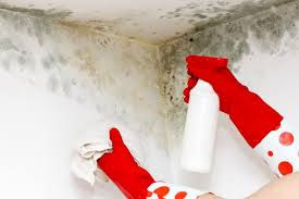 how to treat bathroom mold before painting