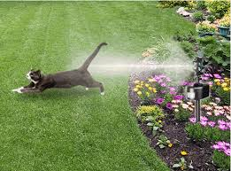 how to keep cats out of the garden. How To Keep Cats Out Of The Garden I