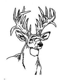 Small Picture Deer Coloring Page Woodburning Pinterest Woodburning Adult